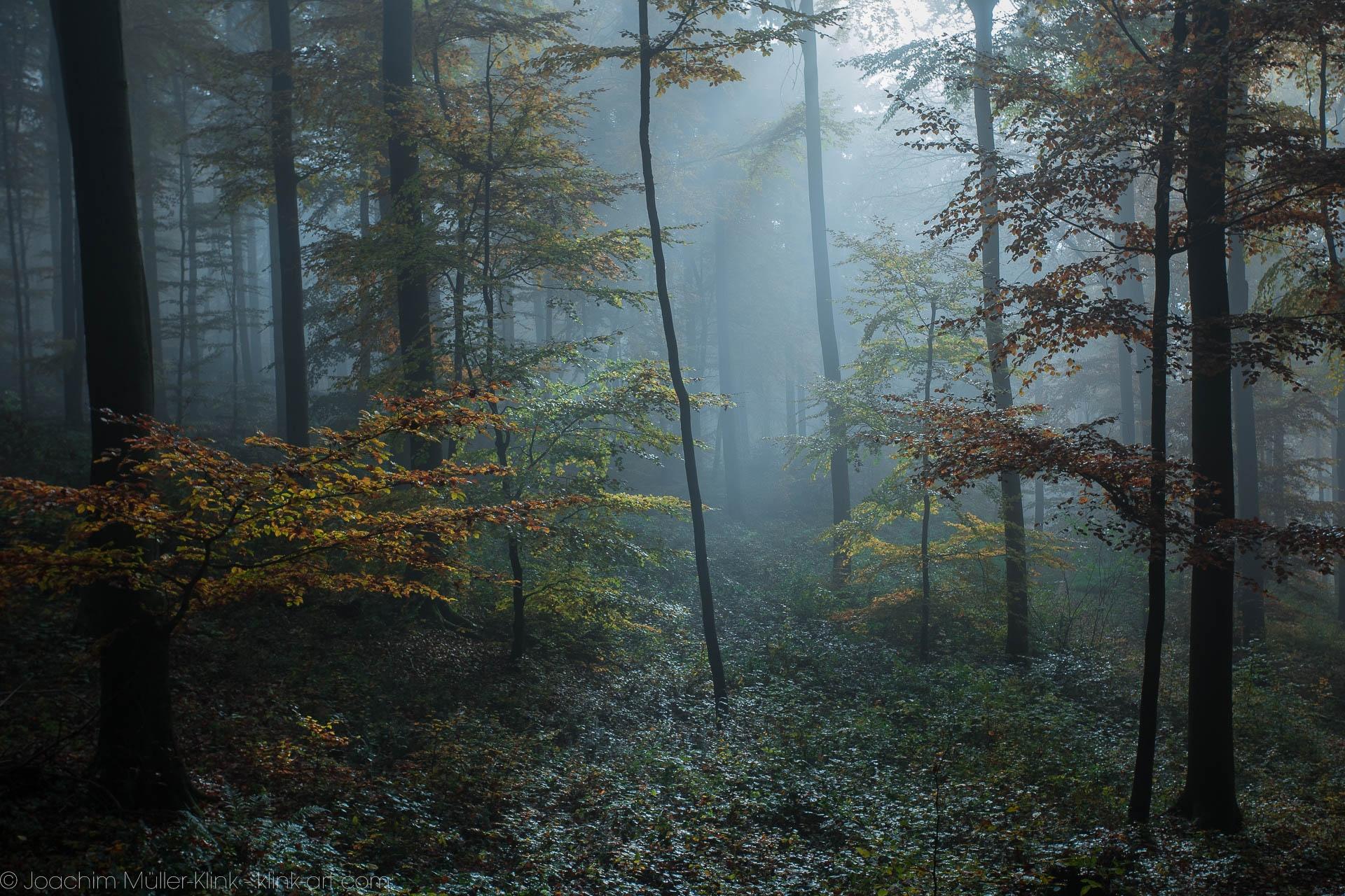 Geheimnisvolle Waldlichtung - Mysterious forest clearing