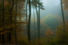 Waldlichtung im Nebel - Forest clearing in the fog