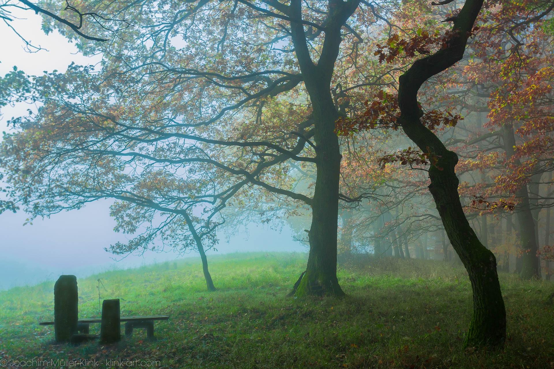 Am Rande eines Buchenwaldes - On the edge of a beech tree forest