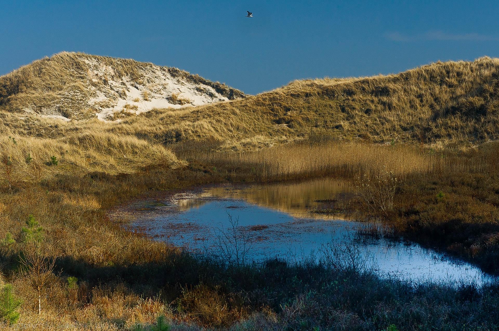 Amrumer Dünen - Dunes of Amrum