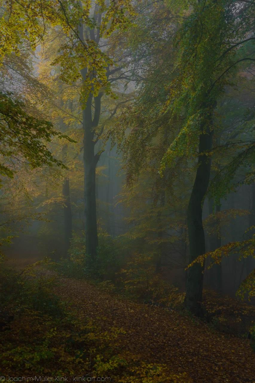 Dunkler Waldweg - Dark forest path