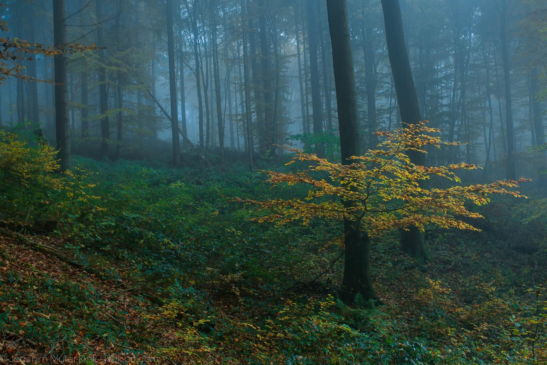 Lichtung im herbstlichen Buchenwald - Glade in autumnal beech tree forest