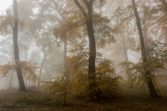 Nebeliger Buchenwald - Misty beech forest