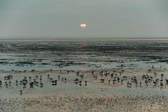 Wildgänse im Wattenmeer - Wild geese in the Wadden Sea