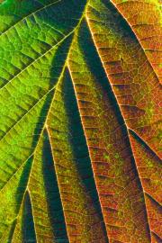 Color gradient - Farbverlauf
