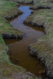 Drainage ditch - Entwässerungsgraben
