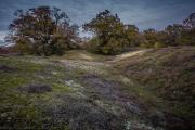 Heath hills in autumn - Heidehügel im Herbst