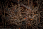 Root system - Wurzelwerk