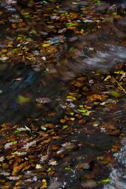 Schwimmende Herbstlätter - Floatin autumn leaves