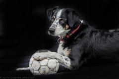 Nahaufnahme eines schwarzen Hundes mit Fußball - Closeup of a black dog with football
